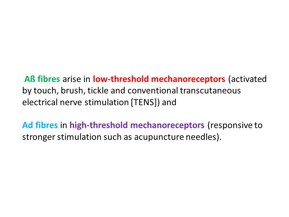 Aß fibres arise in low-threshold mechanoreceptors (activated by touch, brush, tickle and conventional transcutaneous electrical nerve stimulation [TENS]) and